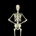 Funny Skeleton Dancing LWP icon