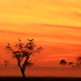Crowned Cranes at Dawn by Dave Roberts - Landscapes Sunsets & Sunrises ( sunrise on masai mara, cranes,  )