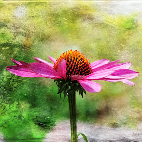 On a Cloudy Day by Randi Grace Nilsberg - Flowers Flower Gardens ( smell, plant, delightful, decorative, colorful, fragile, botanic, blossoming, pleasing, botanical, pretty, blossom, echinacea, fragrant, lovely, coneflower, pink, flower, petal, blooming, fascinating, green, lush, beautiful, purpurea, bloom, exquisite, close-up, soft, charming, marvelous, delicate, summer, herbal, frail, stunning, graceful, garden, natural, floral )