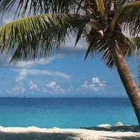 Beach Palm Tree Live Wallpaper 1.0