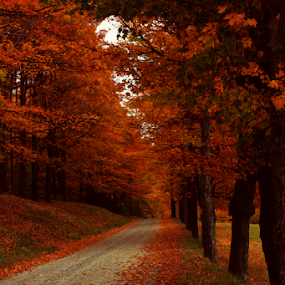 Vermont Country Road by Janet Lyle - Landscapes Forests ( fall leaves on ground, autumn, foliage, fall, vermont )