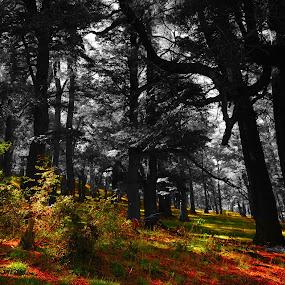 Bosque encantado by Daniel Sapag - Landscapes Forests ( bosque, arboles, forest floor, colores, naturaleza )
