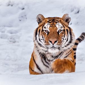 tigris-7683-2.jpg