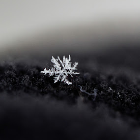 Snowflakes by Toni Geib - Nature Up Close Other Natural Objects ( macro, winter, macro lens, snow, snowflakes, snowflake, close up )