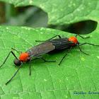 March Flies