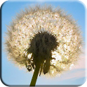 3D Dandelion wallpaper icon