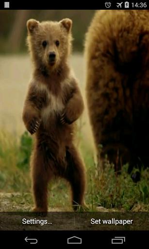 귀여운 곰 동영상 라이브 월페이퍼