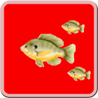 Fish Hunter icon