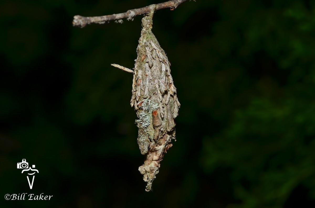 Evergreen Bag Worm Moth Bag