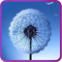 Galaxy S3/S4 Fly Dandelion icon