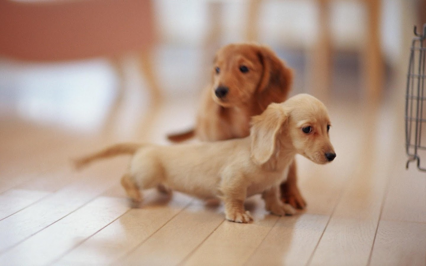 Lovely Dog Wallpaper HD Apl Android Di Google Play