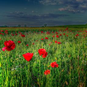 by Steve Evans - Landscapes Prairies, Meadows & Fields (  )