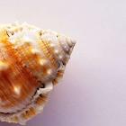海螺拼图 icon