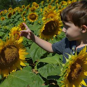 Sunflowers by Shannon Maltbie-Davis - Babies & Children Children Candids (  )