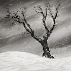 Árvore Solitária (Inverno) icon