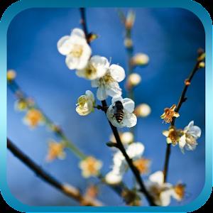 唯美花卉動態桌布(Free) 個人化 App LOGO-硬是要APP