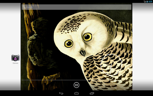 Audubon's OWLS HD+ Wallpaper- screenshot thumbnail