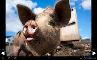 Screenshot of Toddler Animal Sounds