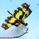 Tiger Dragonfly