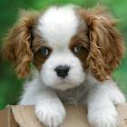 可爱的小狗动态壁纸。 icon
