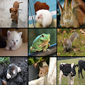Toddler animal dictionary icon