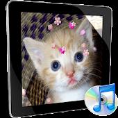 mp3 MusicPlayer Flower theme