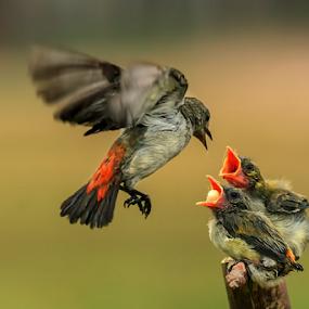Mom.....Please come back  by Husada Loy - Animals Birds