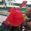 common flower