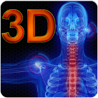 Anatomy 3D icon