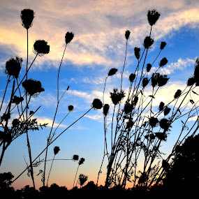 ugly wild flowers  by Amy Barcroft - Flowers Flowers in the Wild
