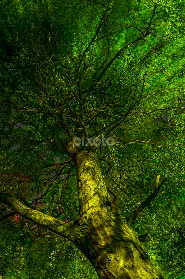 Treetop at night by Predrag Uskokovic - Nature Up Close Trees & Bushes ( tree, treetop, green, night )