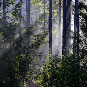 by Roseann Jech - Landscapes Forests