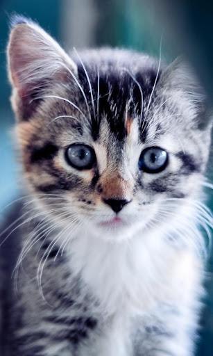 萌寶貓咪動態桌布
