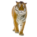 Tiger Sticker widget logo