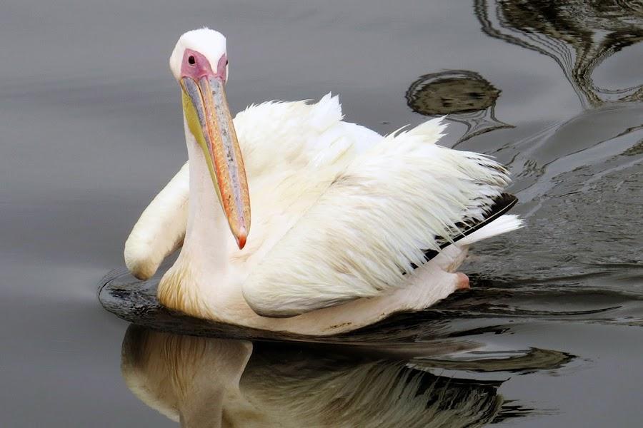 by Jo-Ann de Smit - Animals Birds (  )