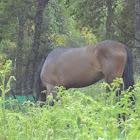 horse(en) caballo(es)