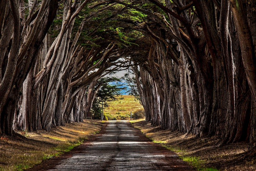 Arc of Trees by Carol Plummer - Nature Up Close Trees & Bushes ( nature, arc, trees, nature close up, landscape, path,  )