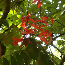 Trees Of South India