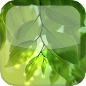 Natural Leaf S5 Live Wallpaper icon