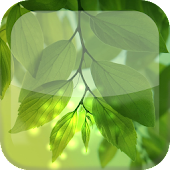 Natural Leaf S4 Live Wallpaper