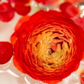 flowers by Edmar Colo - Flowers Flower Arangements