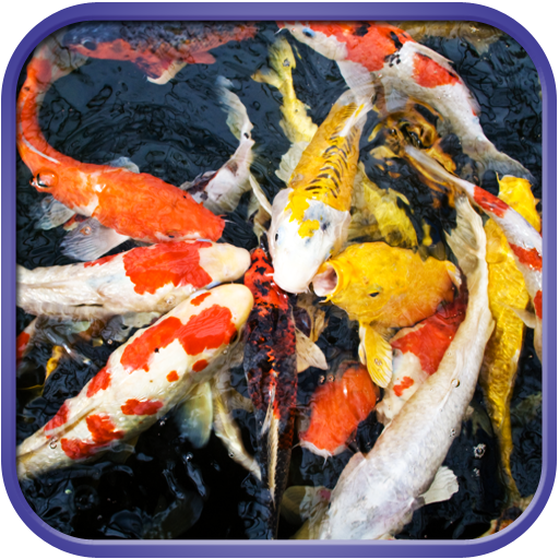 Fancy Koi Fish Live Wallpaper LOGO-APP點子