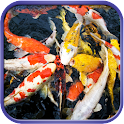 Fancy Koi Fish Live Wallpaper icon