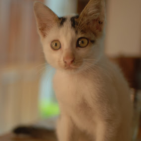 by Danang Kusumawardana - Animals - Cats Portraits