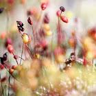 Moss Blossom