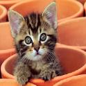 Cute kitten Puzzle icon