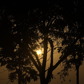 Sunrise by Palak Patel - Landscapes Sunsets & Sunrises