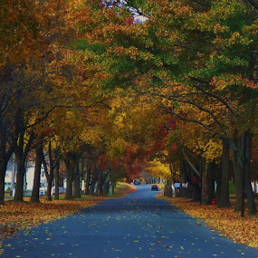 Autumn Road by Monroe Phillips - City,  Street & Park  Street Scenes ( , fall, color, colorful, nature )