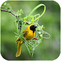 Cute Bird icon