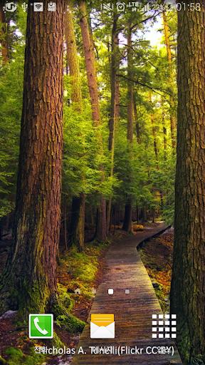 따스한숲속배경